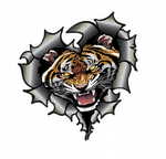 Ripped Torn Metal Heart Carbon Fibre with Angry Roaring Tiger Motif External Car Sticker 105x100mm